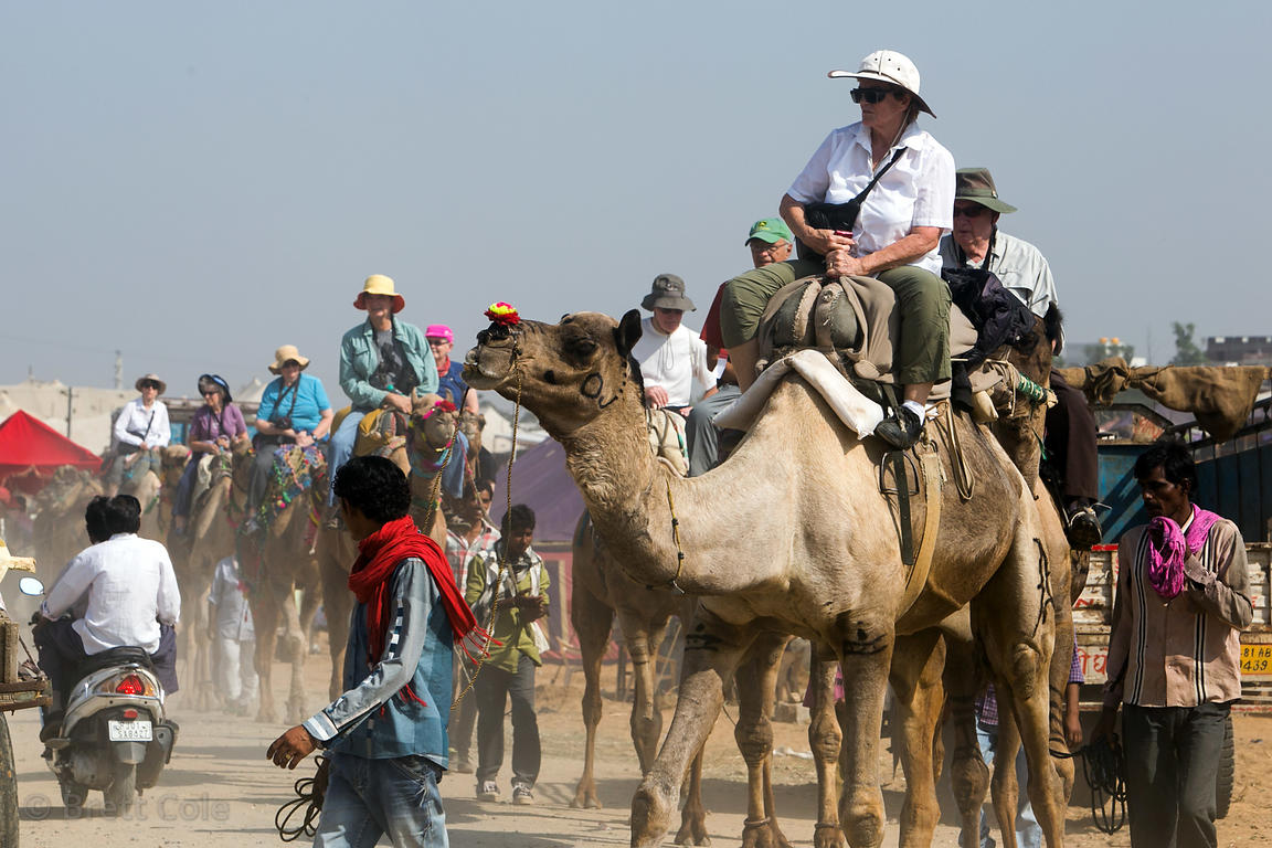 A long procession of foreign tourists ride camels during the Pushkar Camel Fair, Pushkar, Rajasthan, India