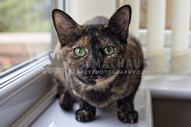 young cat perched on window sill looking to camera