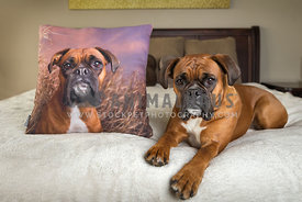 Boxer Dog Posing with photo pillow