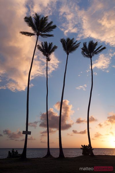 Tall palm trees at sunrise in the Caribbean