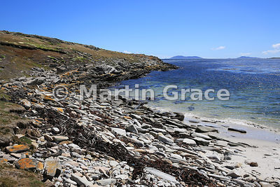 Beach west of The Plain, Carcass Island, Falkland Islands