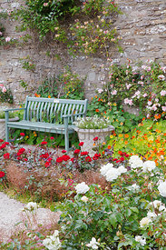 Roses and Nasturtiums by bench, Queen Mother's garden