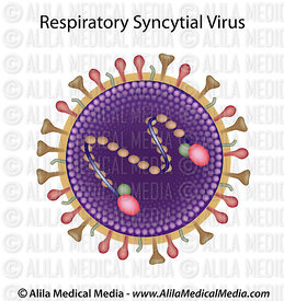 Respiratory syncytial virus, unlabeled.