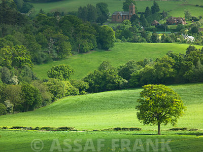 Green fields and trees, Albury, Surrey, UK