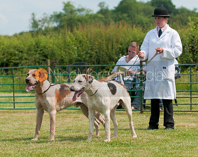 Best Dog Hound from Classes 1,2 and 3, Blaston Hound Show 2010