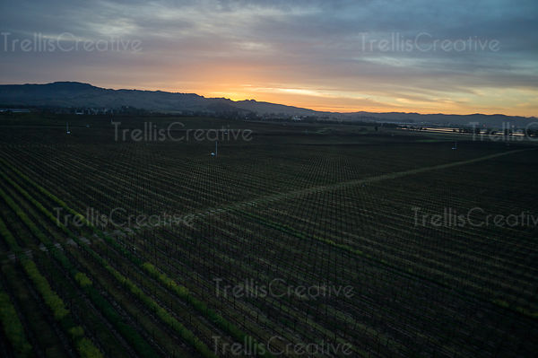 Aerial colorful vineyard sunset in a vineyard