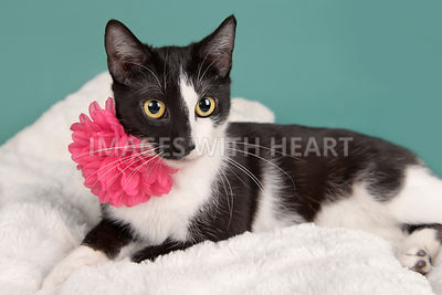 Kitten with pink flower lying down facing camera