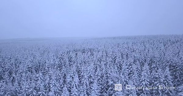 Forested Area in Winter North of Malmedy Belgium