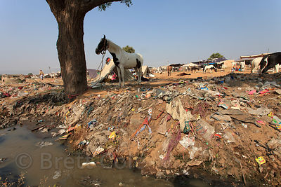 Garbage litters the banks of a small creek on the mela (fair) grounds, Pushkar, Rajasthan, India.