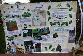 Poster promoting ecological coca production and informing about pests that attack coca plants ( Erythroxylum coca ) , La Paz ...