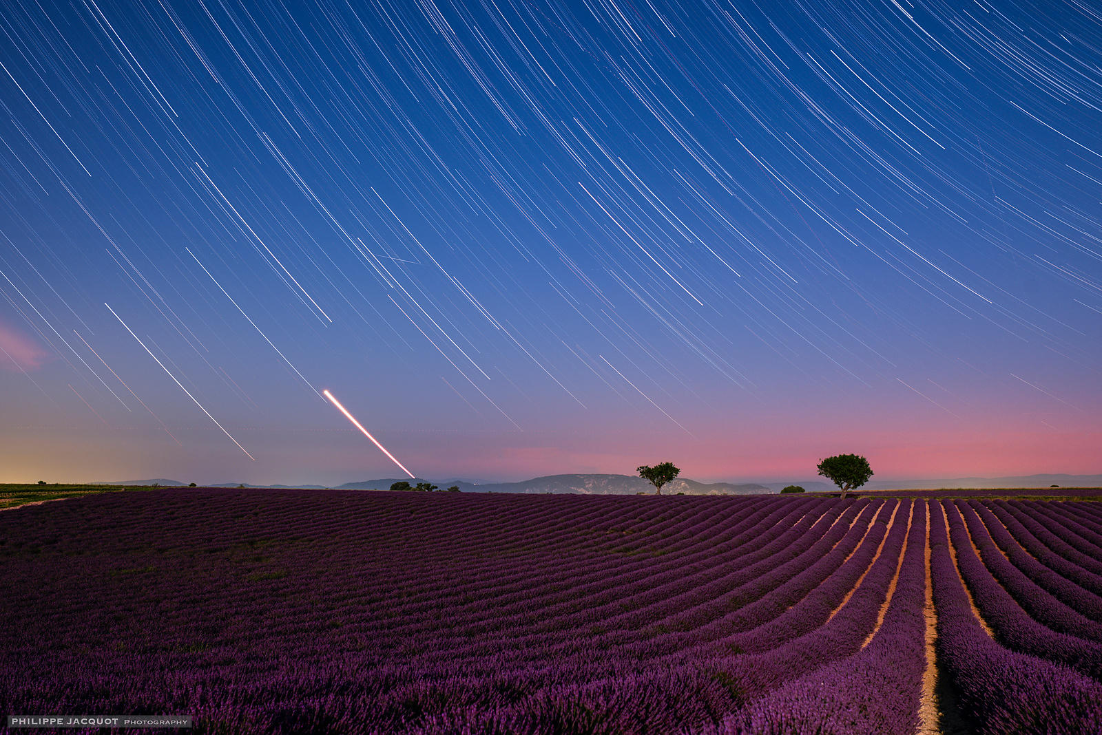 Venus setting over lavender fields - Valensole - Alpes Haute Provence