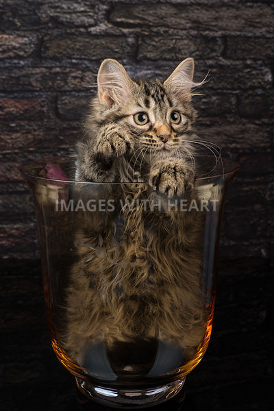 kitten in a vase reaching out