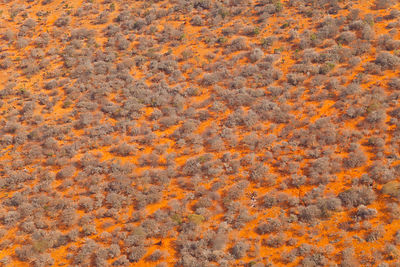 Aerial view of savanna land in the dry season, Rift Valley, Tanzania, August 2009