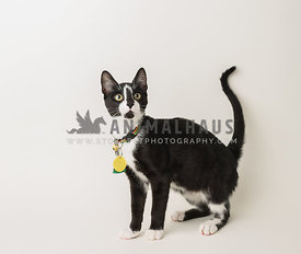 rescue tuxedo cat wtih black markings on face