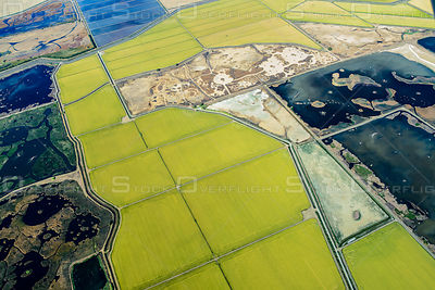 Rice Farms in the Wetlands of California's Central Valley