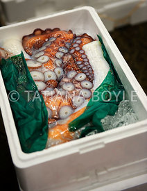Octopus packaged for shipment