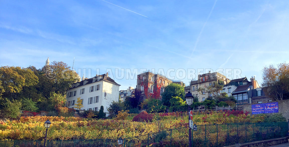 Vine-field-Montmartre-Paris-004