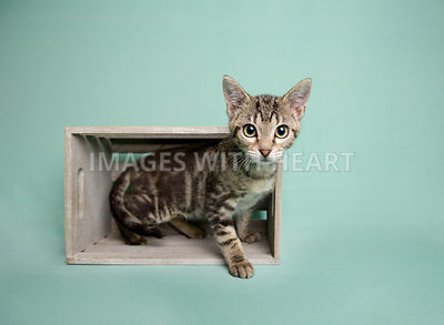 tabby kitten in gray crate