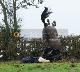 Boogie Machin falling at a hedge near Withcote