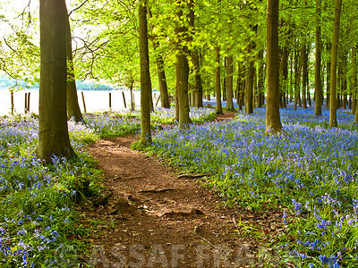 Path in Bluebell wood