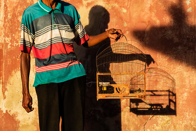 Man Holding Bird Cage in Early Morning Light