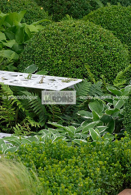 Ball shaped, Buxus, Contemporary garden, Perennial, Sphere shaped, Topiary, Common Box, Digital
