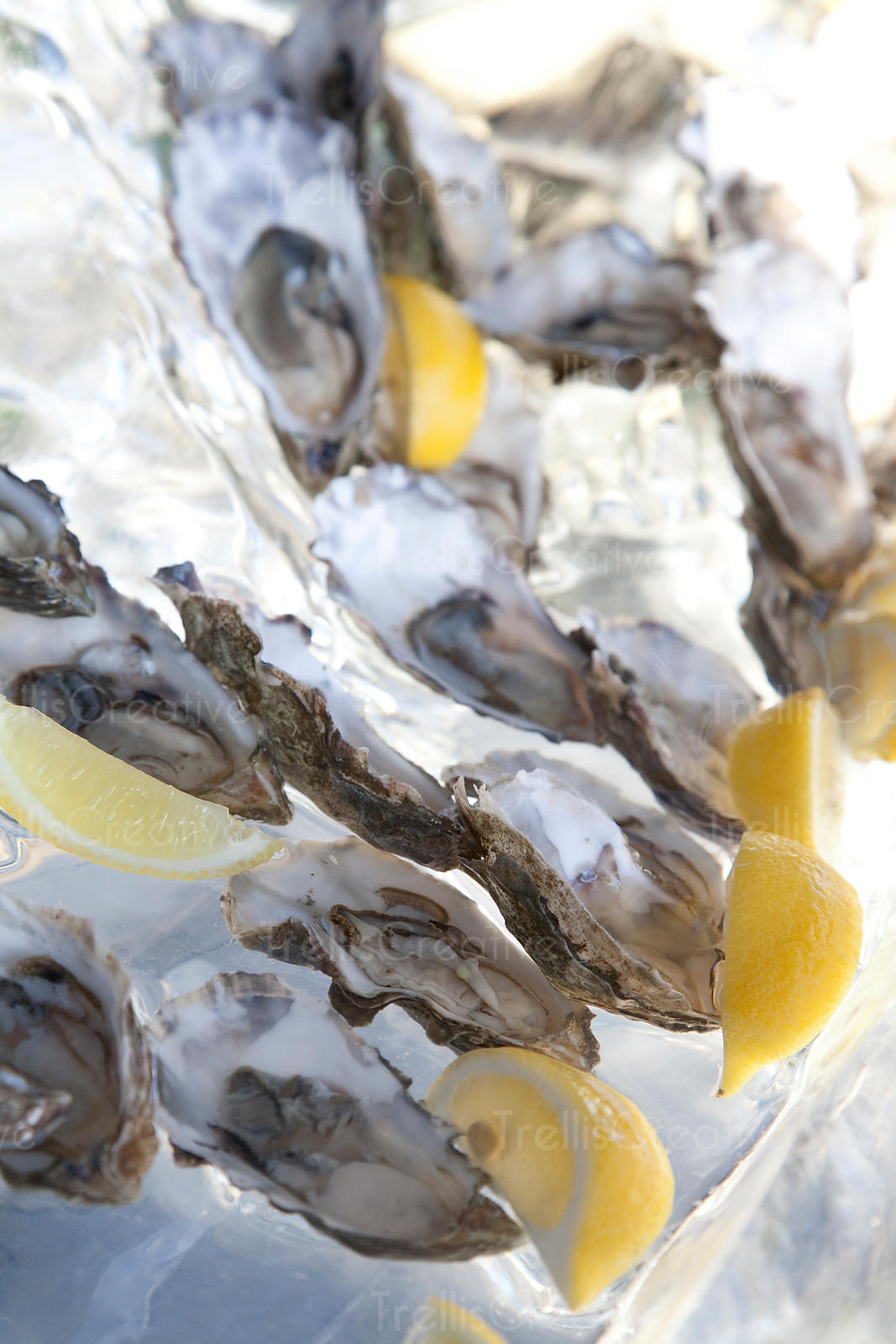 Shucked oysters on a bed of ice