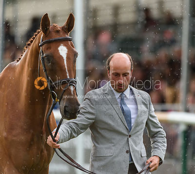 Tim Price and BANGO at the trot up, Land Rover Burghley Horse Trials 2018