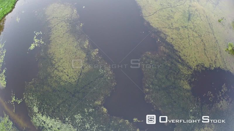 Aerial shot ascending over an area of wetland in the Atlantic Forest, Reserva Ecologica de Guapiacu, Rio de Janeiro, Brazil, ...