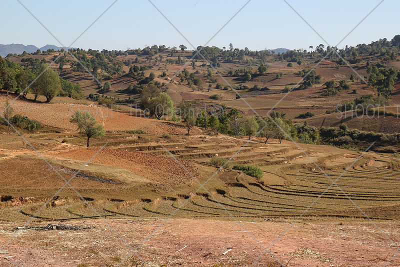Terraced fields in Myanmar,Burma