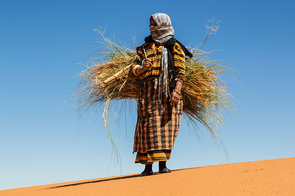 Woman Carrying a Bundle of Grass for Fodder