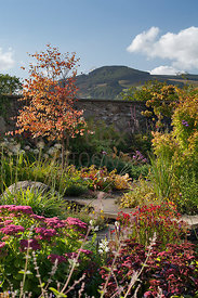 View from walled garden planting to Farragon Hill; Cercidiphyllum japonicum, Verbena bonariensis, Sedum etc