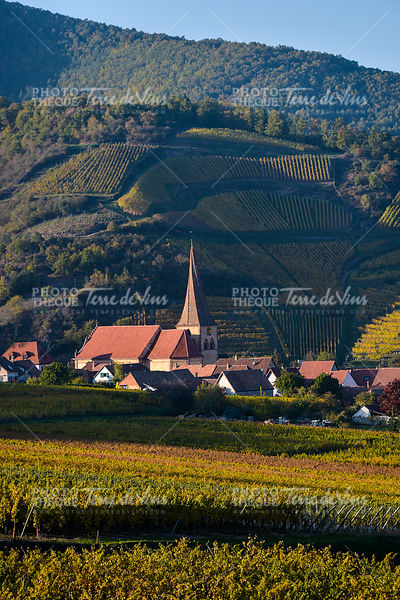 Niedermorschwih, Alsatian vineyards, Alsace, France, Europe, Autumn