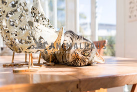 Cat on dining room table in sun room