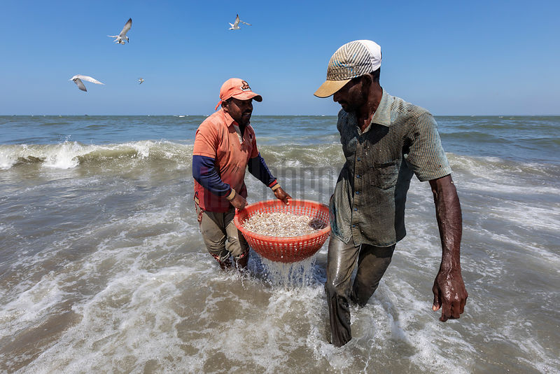 Fishermen Carrying a Basket full of Fish after Washing them in the Ocean
