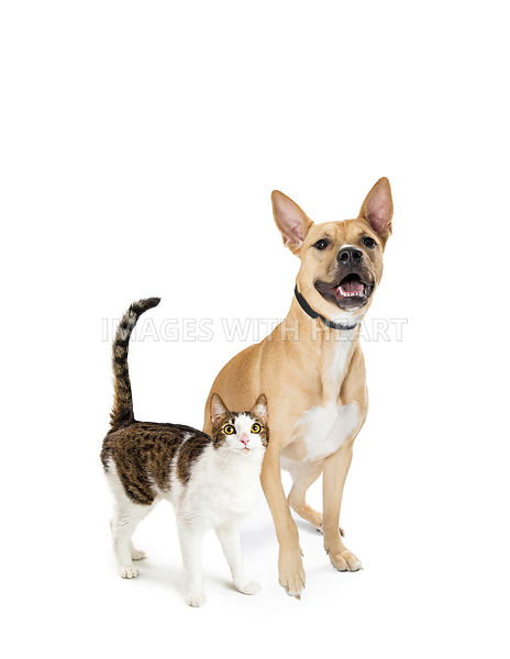 Excited Cat and Dog Together Looking Up