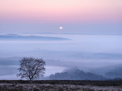 A soft and misty sunrise over Yarner Wood, Dartmoor National Park, Bovey Tracey, Devon, UK
