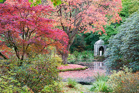White gazebo provides focal point by pond among autumnal Acers