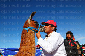 Judge kisses a llama after checking its teeth during competition, Curahuara de Carangas, Bolivia