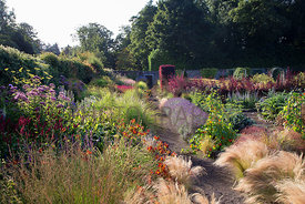 Planting by path including lavender and grasses