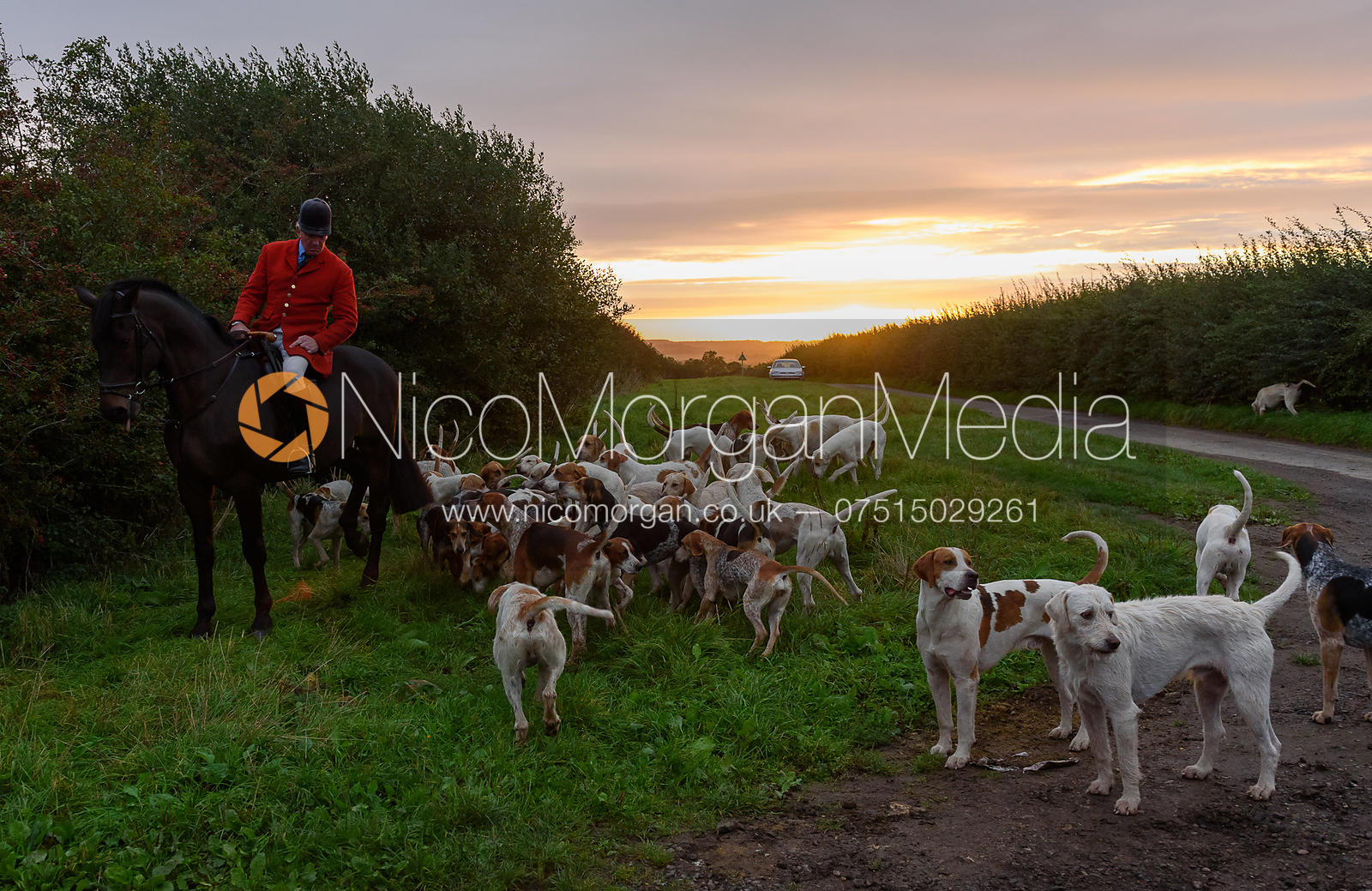 Huntman and hounds in the morning sun
