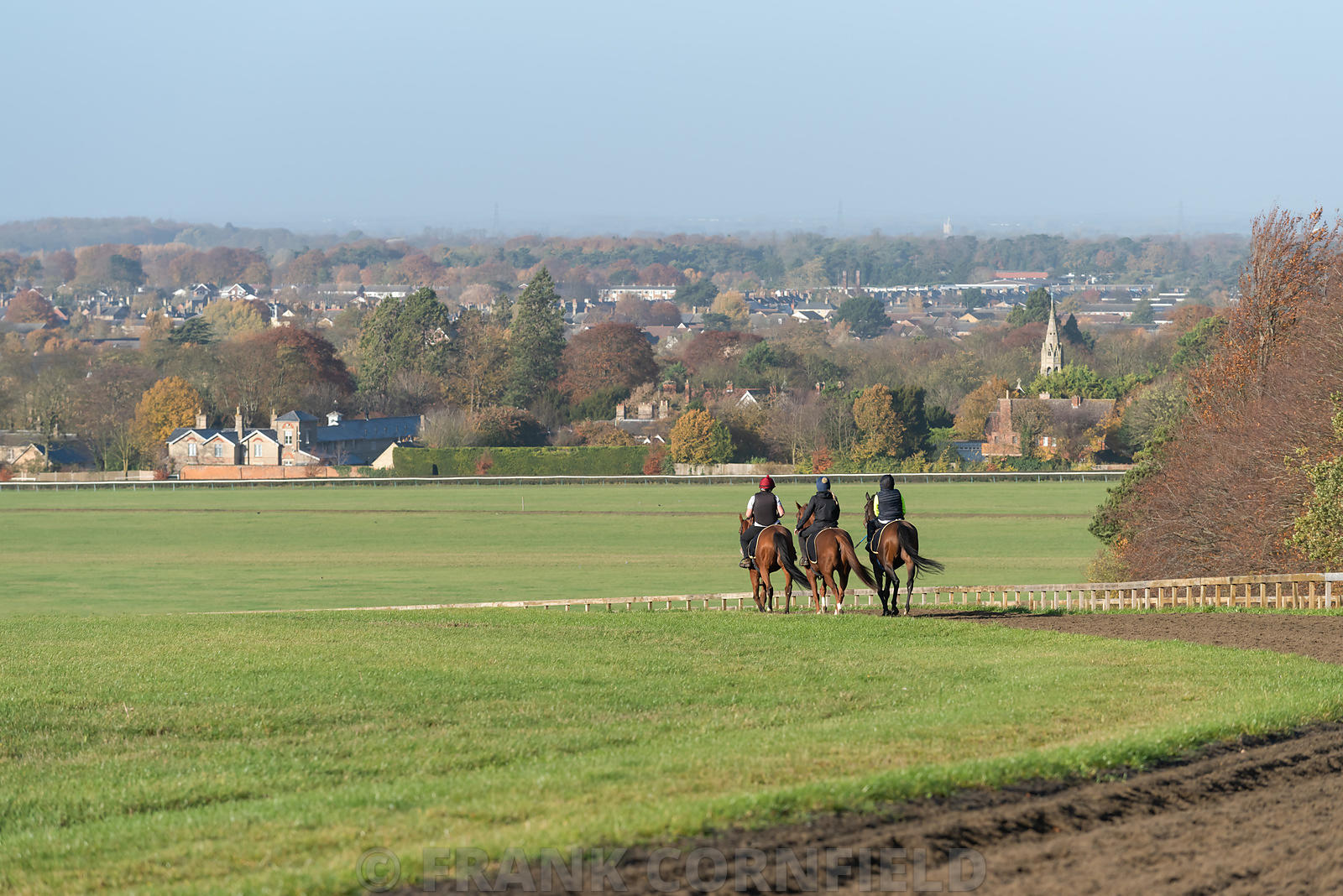Three horses after working on the Warren Hill racehorse training gallops at Newmarket, England.