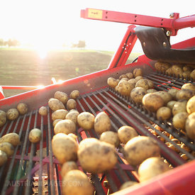 Germany, Hessen, Combine harvester loading potatoes