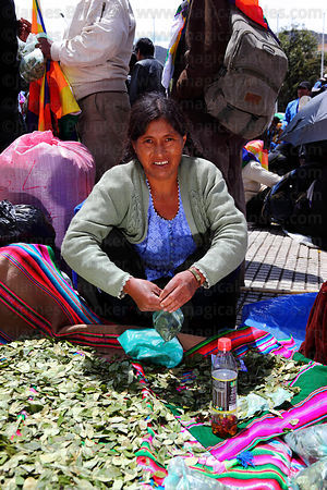 Coca grower with bag of coca leaves ( Erythroxylum coca ) at an event promoting traditional uses of the coca leaf , La Paz , ...