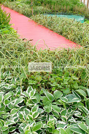 Contemporary garden, Perennial, Red, Wooden footbridge, Digital, Grasses