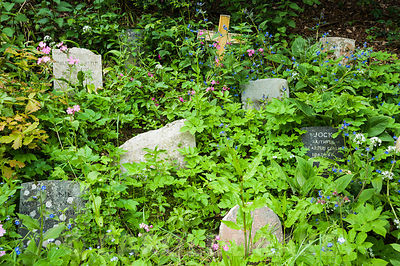 The pets' graveyard, the resting place of much loved dogs of preceding decades including Jock, the faithful bearded collie.