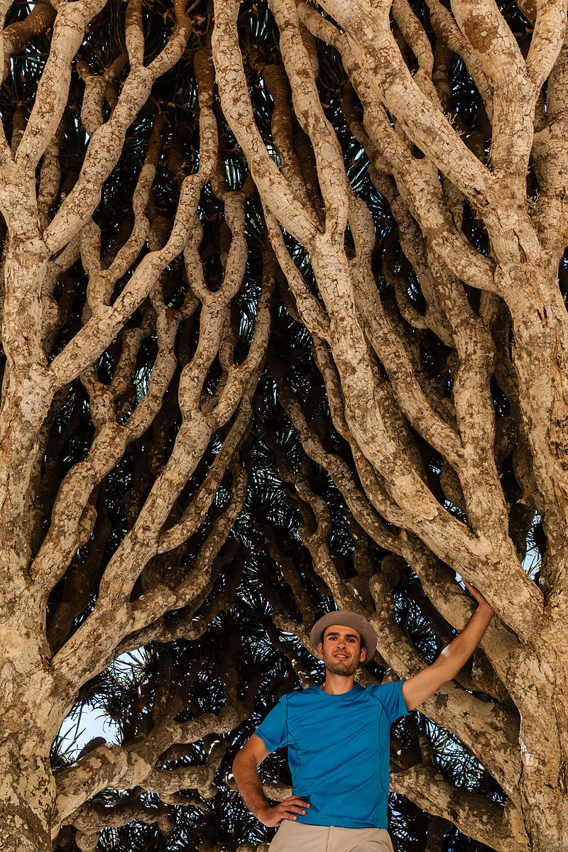 Traveller Standing in a Dragon's Blood Tree