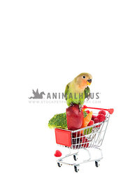 Peach-Faced Lovebird Perching on Shopping Cart filled with Fresh Fruit and Vegetables