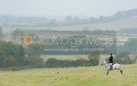 Ollie Finnegan on point above Klondike - The Cottesmore at Langham.