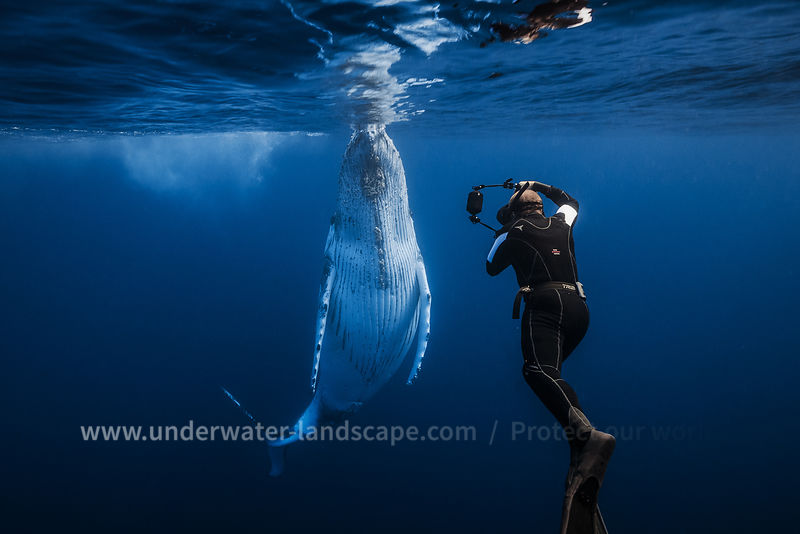 Whale and diver in action!